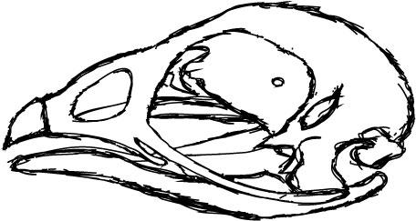 chickenskull