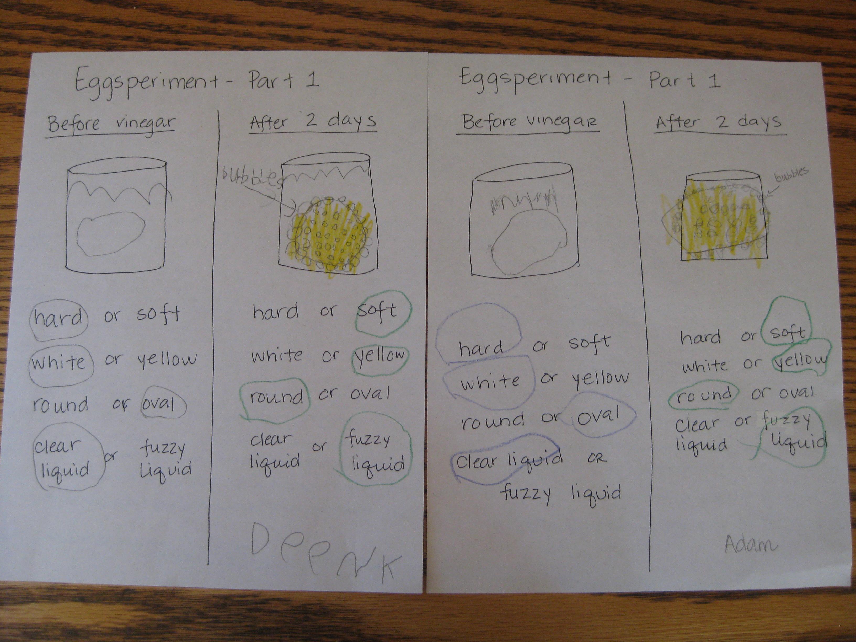 Bouncy Egg Experiment Worksheet