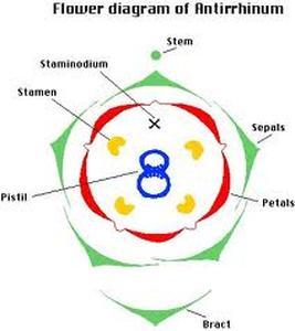 Diagram  Second Bimester