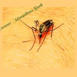 Mosquitoes:  Top Ten Reasons They Bug You