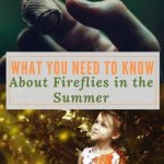 What You Need to Know About Fireflies in the summer