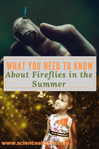 What You Need to Know About Fireflies in the summer-What You Need to Know About Fireflies in the summer-http://sciencealcove.com/2014/07/fireflies-summer-2/