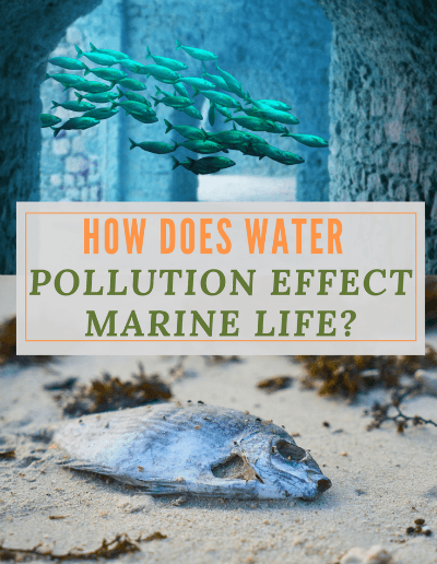How Does Water Pollution Affect Marine Life-http://sciencealcove.com/2014/08/water-pollution-effects-marine-life/