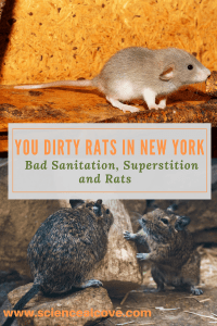 Rats have been known to harbor diseases dangerous to humans for a long time. Scientists have finally completed an eye opening study of rats in New York. #rats #health #rodents #repellant #getridof #control
