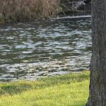 Natural World:  Baxter Creek, Millbrook, Ontario