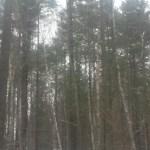 Swarm of Trees