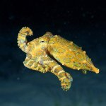 Why is the Beautiful Blue-Ringed Octopus So Deadly?