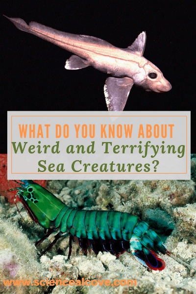 What Do You Know About Weird and Terrifying Sea Creatures?