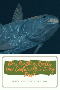 Does Anything Really Die- Coelacanth a Living Fossil-http://sciencealcove.com/2015/03/living-fossil-coelacanth/