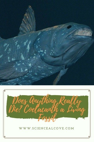 Does Anything Really Die? Coelacanth a Living Fossil