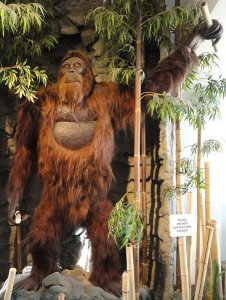 http://upload.wikimedia.org/wikipedia/commons/a/aa/Gigantopithecus_blacki%2C_model_-_San_Diego_Museum_of_Man_-_cropped.JPG