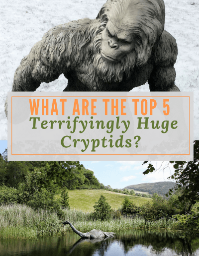 These huge cryptids are the top 5 creatures of cryptozoology. Evidence is sketchy but legends and rumor abound about these 5 hidden animals.