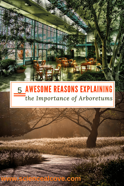 5 Awesome Reasons Explaining the Importance of Arboretums