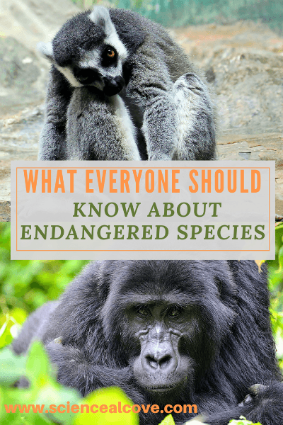 Species don't usually go extinct overnight.  There is a process, usually a fairly long one where its numbers decline until it is no longer found in nature.  The ICUN has developed a system of classification showing the road to extinction.  Fortunately is not necessarily a one-way road. #rareanimals #endangeredspeciesanimals #endangeredspeciesanimals