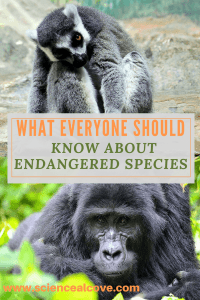What Everyone Should Know About Endangered Species-http://sciencealcove.com/2015/06/what-everyone-should-know-about-endangered-species/
