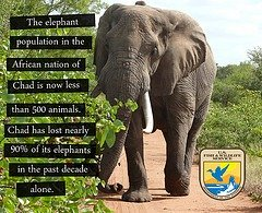 ivory poaching endangered news