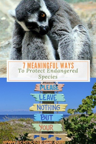 7 Meaningful Ways to Protect Endangered Species