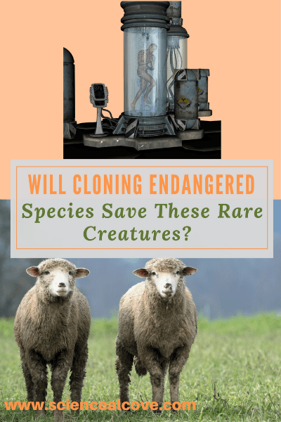 Will Cloning Endangered Species Save These Rare Creatures?
