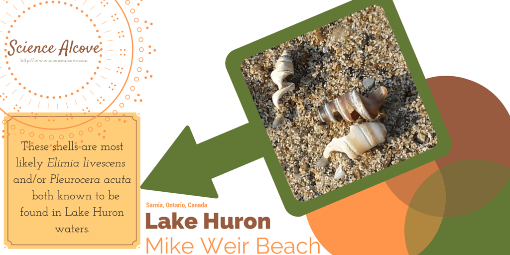 Shells of Lake Huron