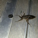 Check out this Bad Bug.  Its Weird, It Flies and What is it?