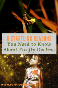 6 Startling Reasons You Need to Know about Firefly Decline-http://sciencealcove.com/2016/06/6-startling-reasons-know-firefly-decline/