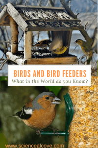 Birds and Bird Feeders- What in the World do you Know