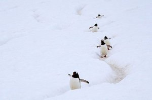 15 Absolutely Adorable Facts to Make you Love Penguins More