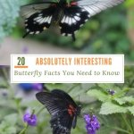 20 Absolutely Interesting Butterfly Facts You Need to Know