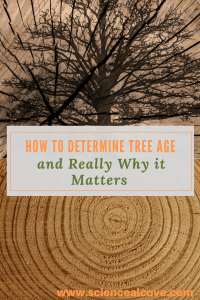 Determining tree age can be done in a few ways. One is simple enough to do as a science activity with kids. Tree aging can provide a wealth of information. Examining tree rings can not only age a tree but also provide a lot of interesting historical and climate information. #determiningtreeage #dendrochronology #treescience #science