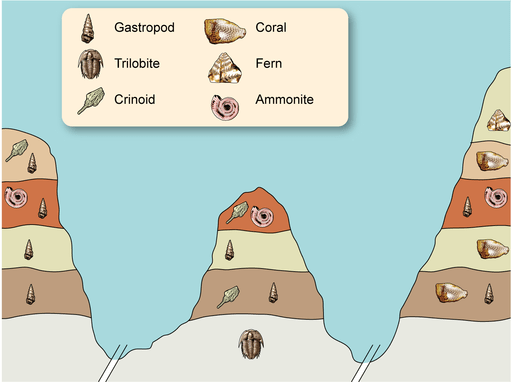 Fossils are found in layers which tell us lots of information like how old they are.