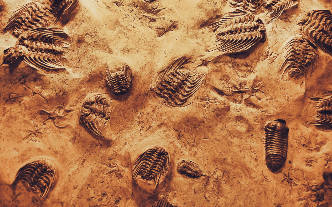 How are fossils formed? shell fossils