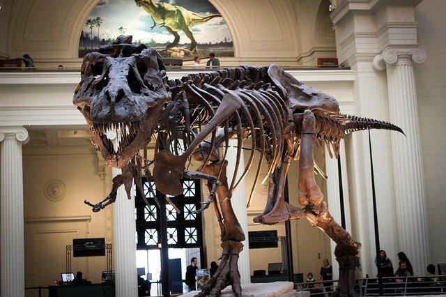 T.rex museum skeleton.