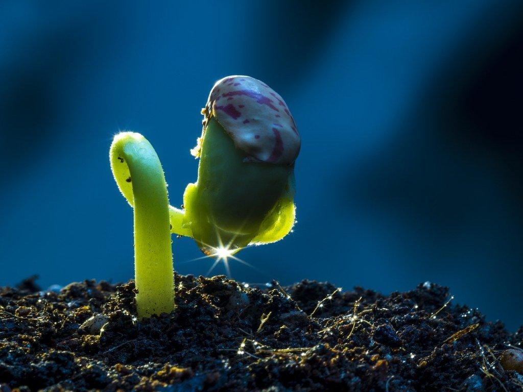 Living things grow