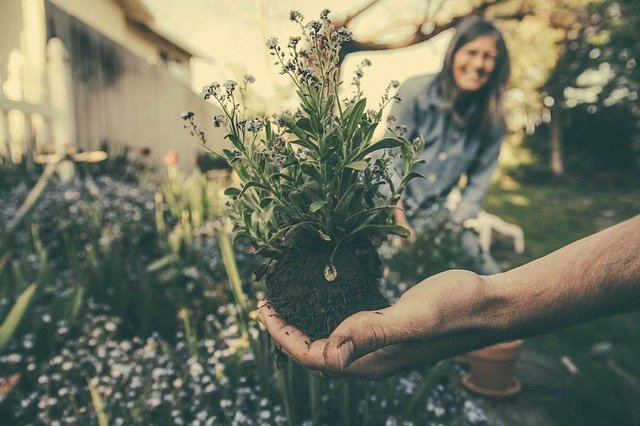 Spend time in your garden to reduce stress