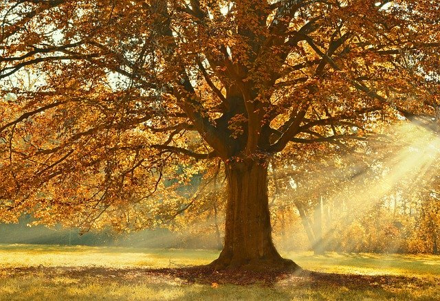 deciduous trees can help save energy in the summer