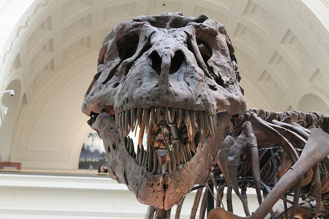 Visit a museum to encourage interest in science