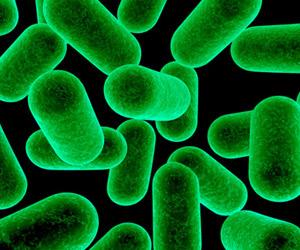 Gut Microbes Image: NIH