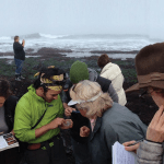 Citizen Science Tidepools