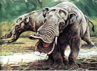 The Disappearance of the Elephant Caused the Rise of Modern Man