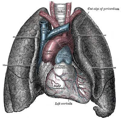 Drug shows good results in treating most common form of lung cancer