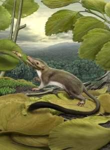 mammal-ancestor