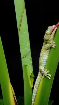 Scientists discover gecko's cleanliness secret