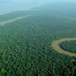 300px-Aerial_view_of_the_Amazon_Rainforest