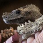 With global warming, will iguanas grow as big as Komodo dragons?