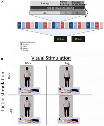 Full body illusion is associated with a drop in skin temperature