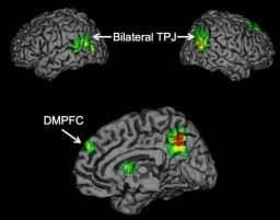 How the brain creates the 'buzz' that helps ideas spread