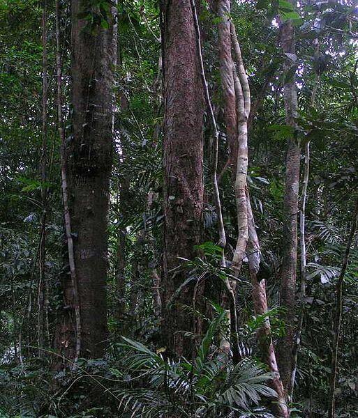 Wildlife face 'Armageddon' as forests shrink