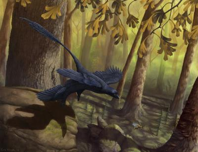 Dinosaur wind tunnel shines light on bird flight
