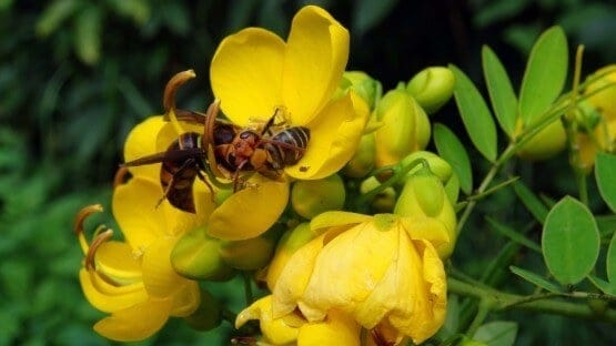 Fear of Predators Drives Honey Bees Away from Good Food Sources
