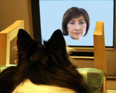 There you are! Dogs recognize faces from images, prefer each other